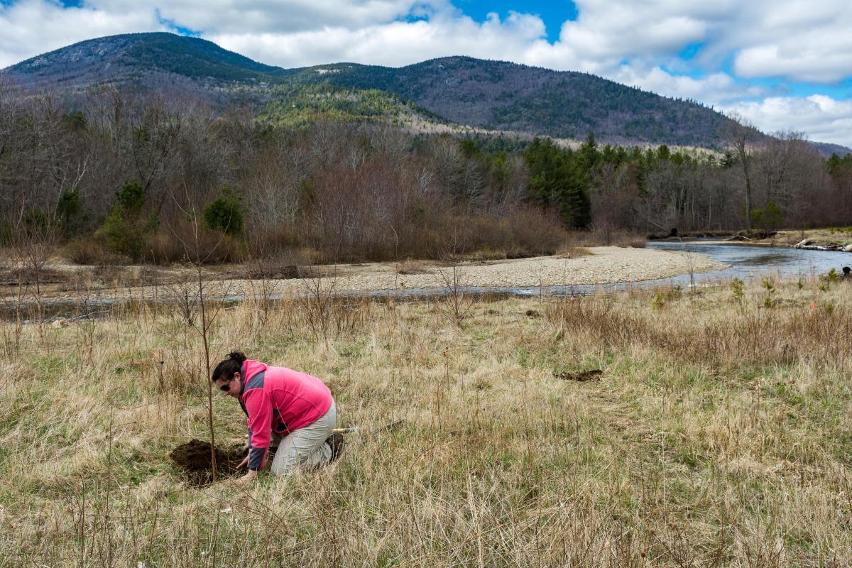 rivermede planting