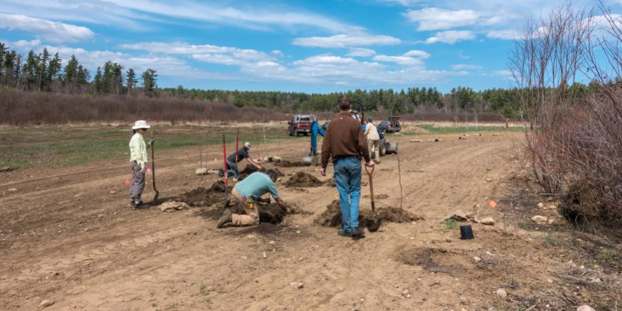 Riparian Tree Planting Ausable River