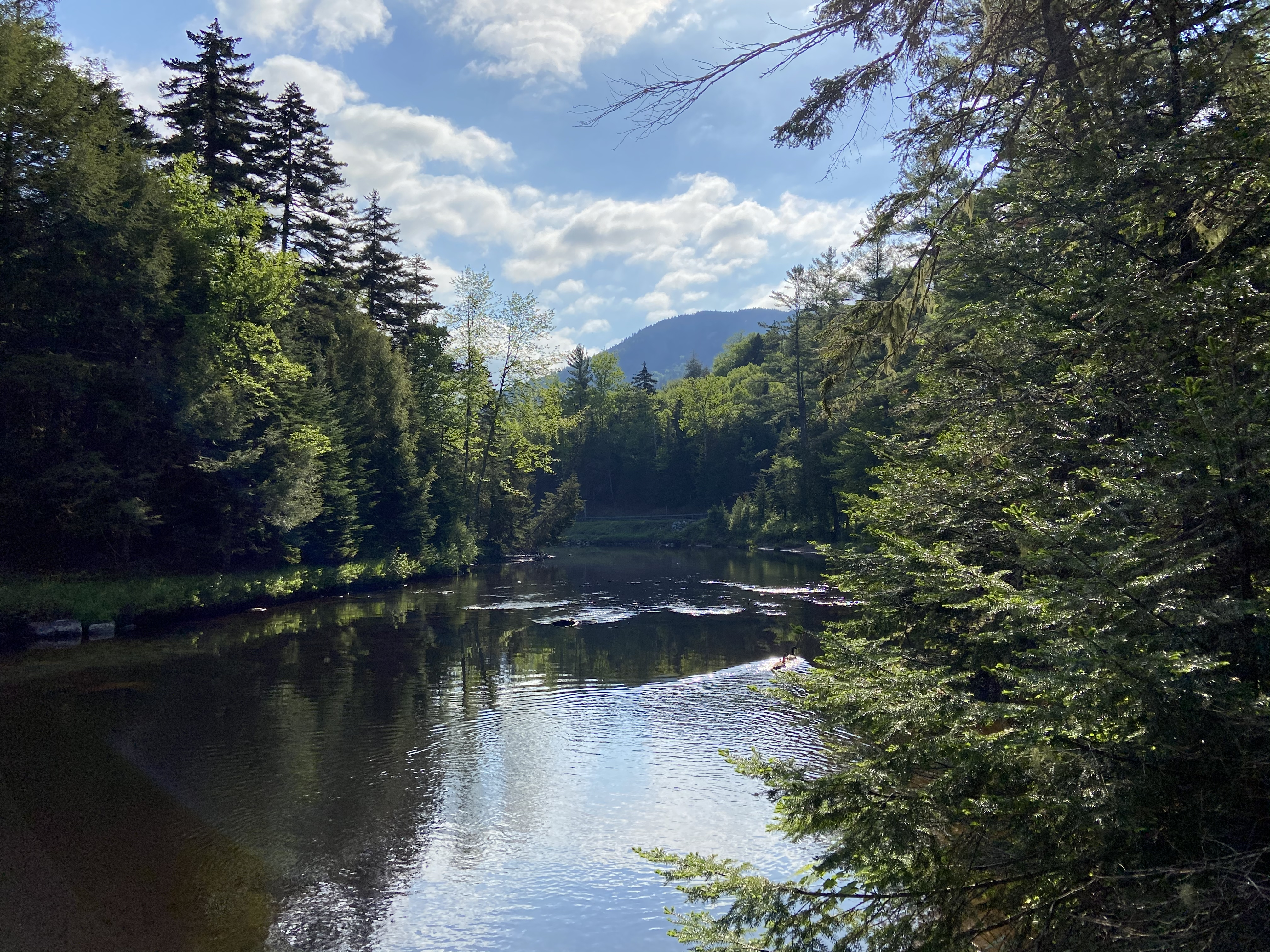 West Branch Ausable River, early summer