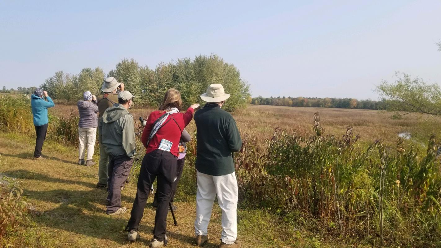 people standing and looking out into field wetland at birds