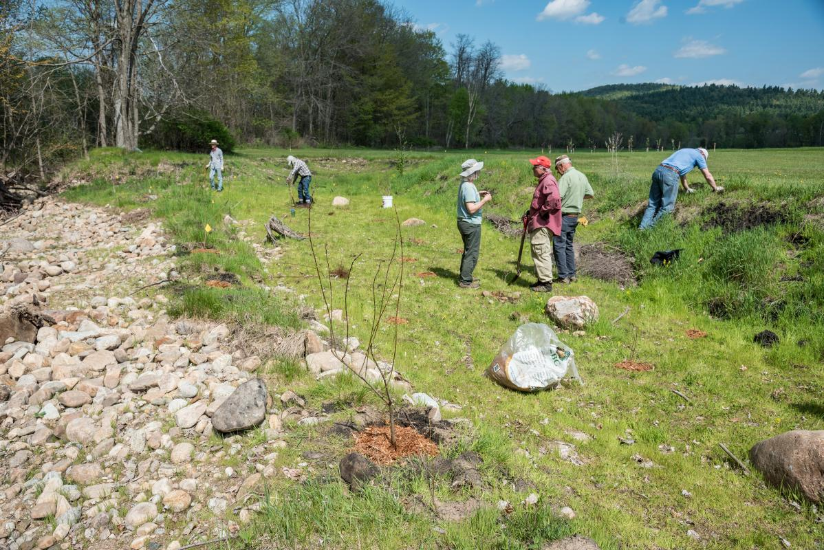 Rocky Branch Planting