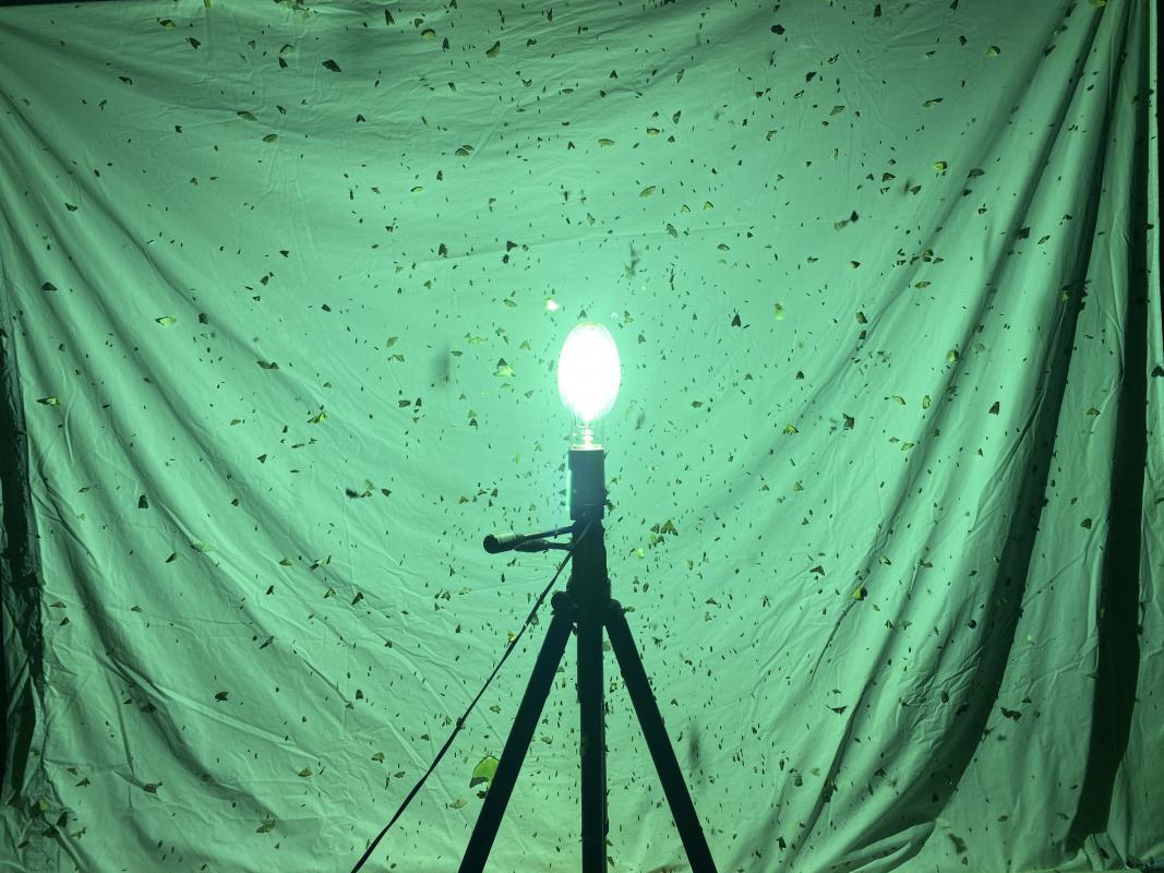 Mercury vapor light in front of white sheet
