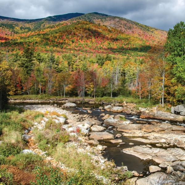 Caring for the Ausable