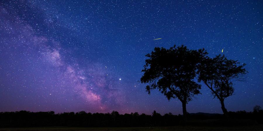 Milky Way Behind Trees