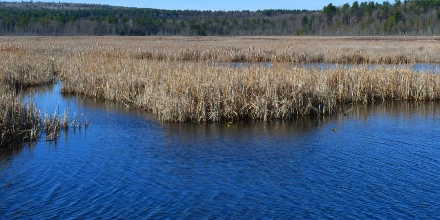 A marsh in early spring under a clear blue sky